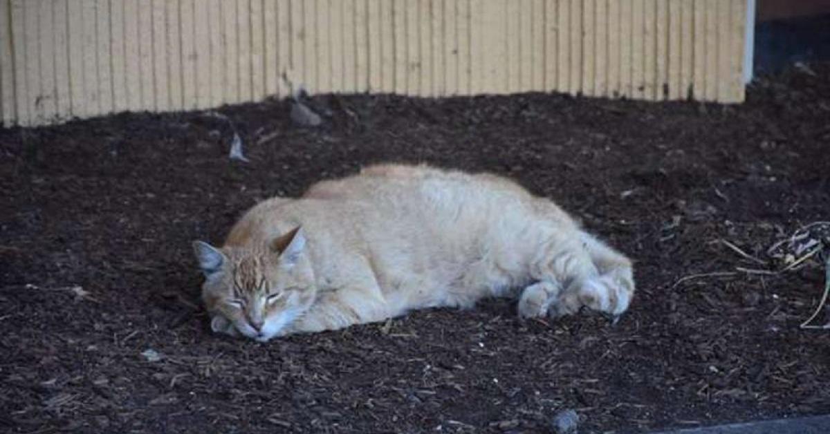 gatto-denny