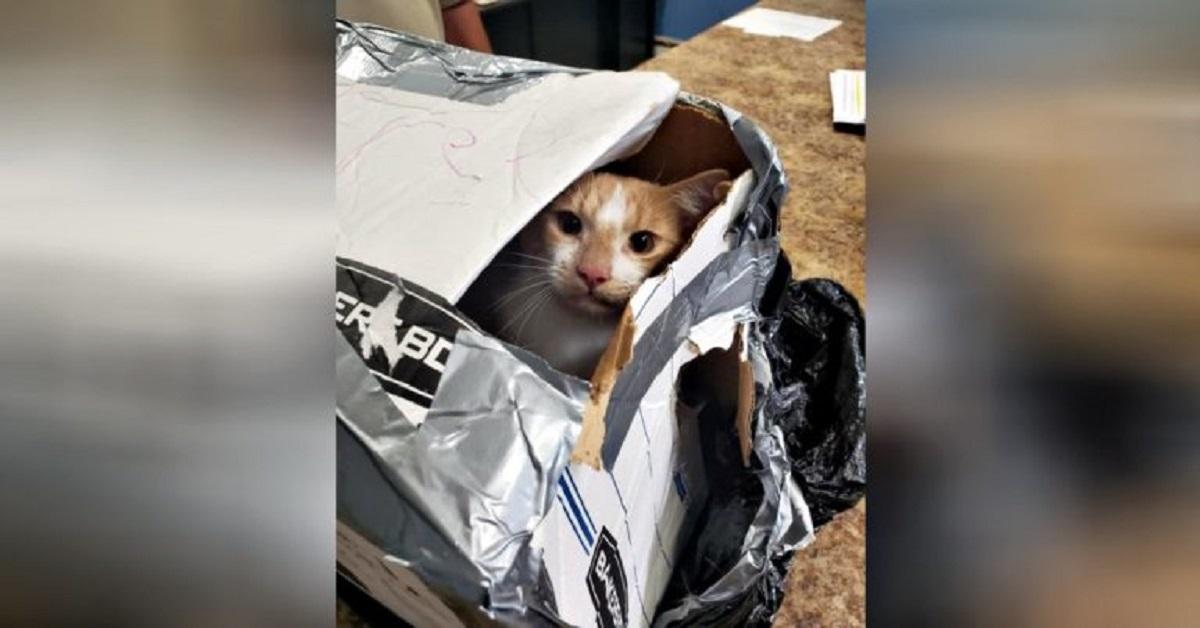 gatto-salvato
