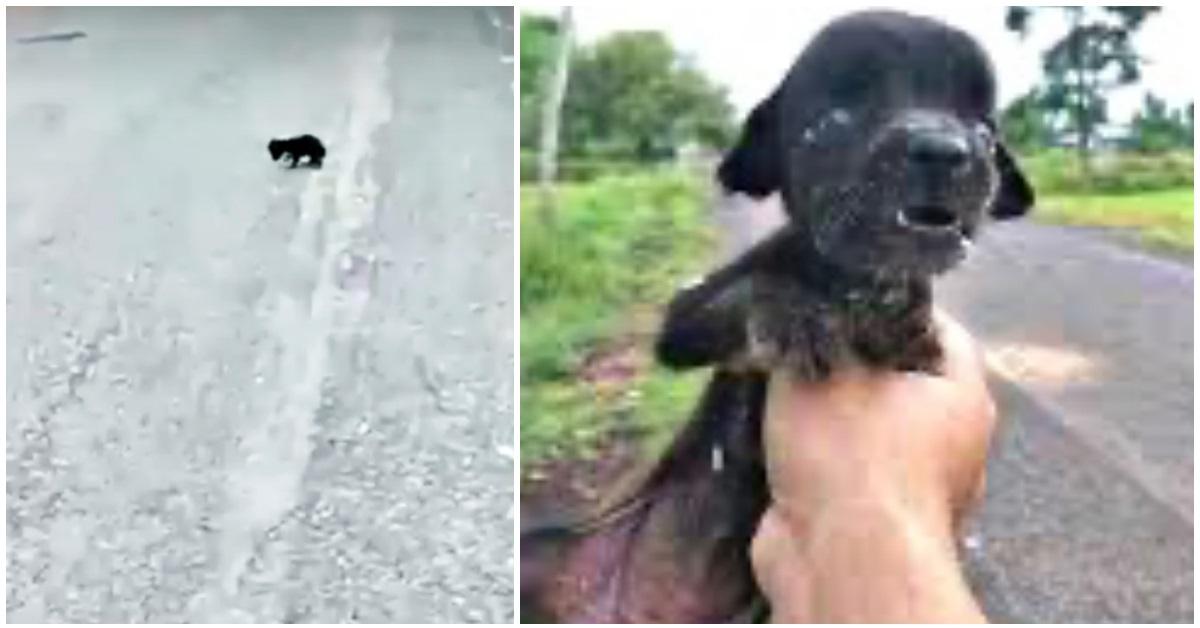 il-salvataggio-della-cucciola-trovata-sul-ciglio-della-strada-e-di-come-e-cambiata-la-sua-vita-per-sempre