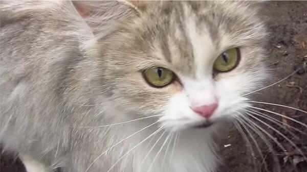 la-gattina-randagia-che-chiede-aiuto 1