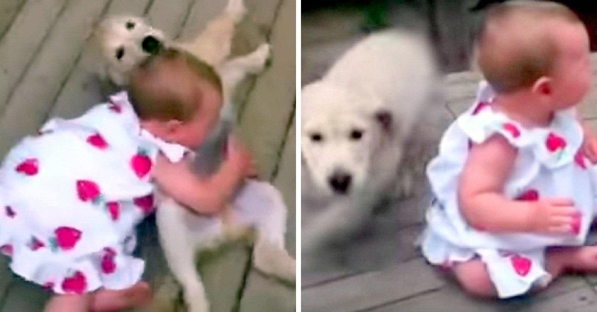 La clip virale della piccola Ella e del cucciolo