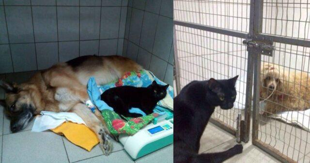 La-storia-di-Lucifero-il-gatto-paralizzato-a-causa-di-un-incidente