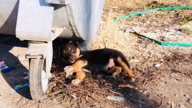il-salvataggio-del-cucciolo-abbandonato-vicino-ai-secchi-della-spazzatura 1
