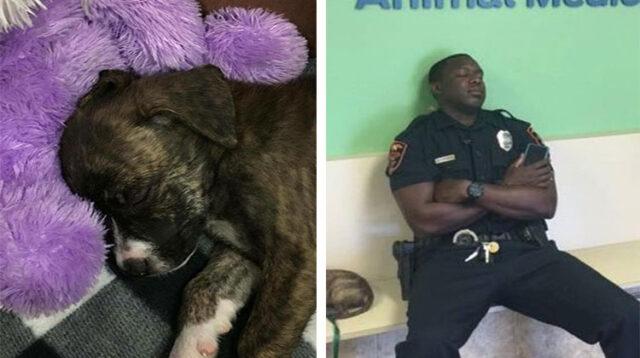 Il-gesto-gentile-del-poliziotto-per-il-cucciolo-abbandonato 2