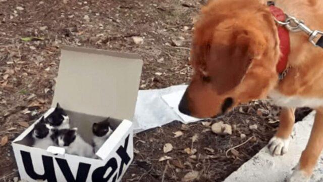 Aragon-salva-la-vita-dei-gattini-abbandonati