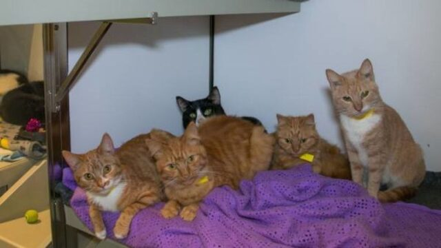 trovati-11-gattini-abbandonati-in-scatole-di-cartone 2