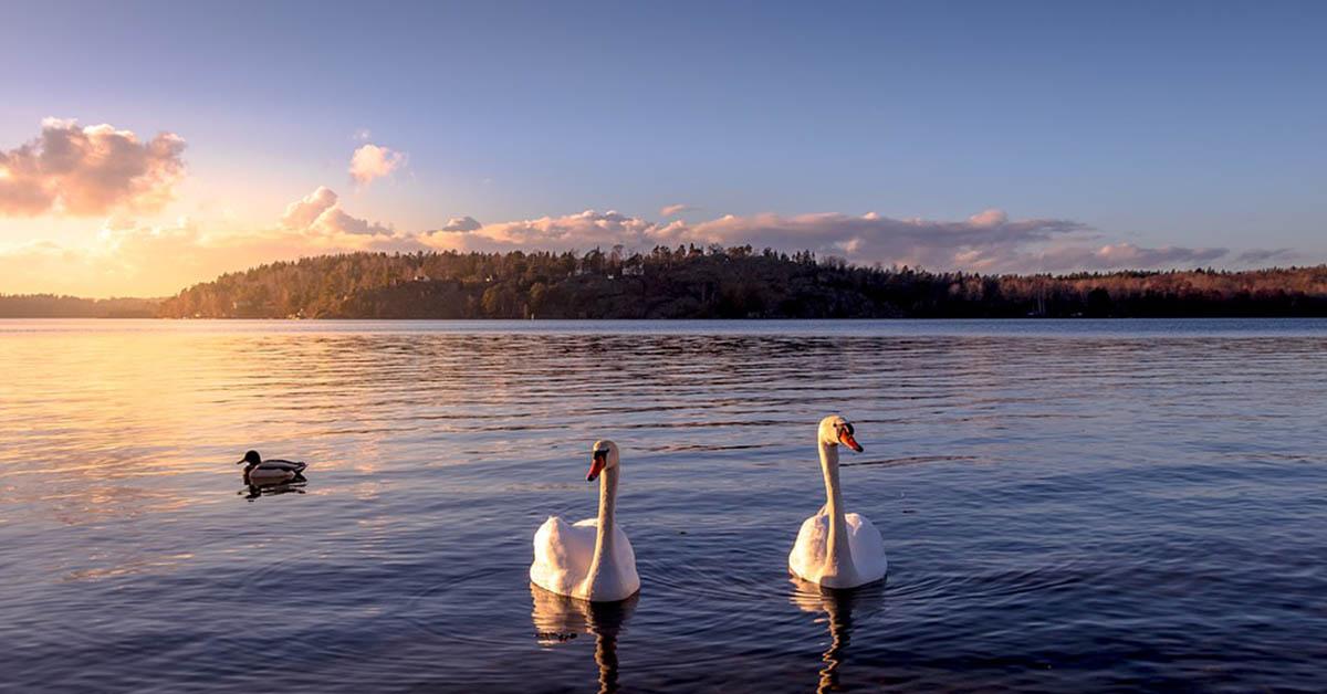 Oggi puoi diventare il proprietario di un'isola in Svezia