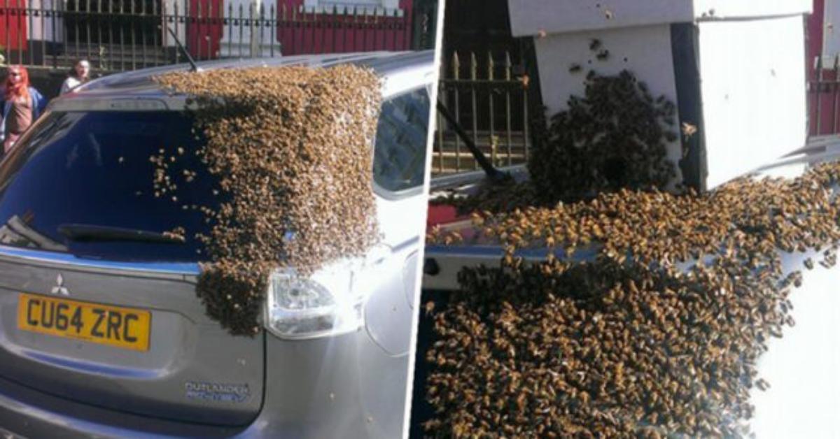 Sciame d'api insegue una macchina per due giorni, per salvare la regina