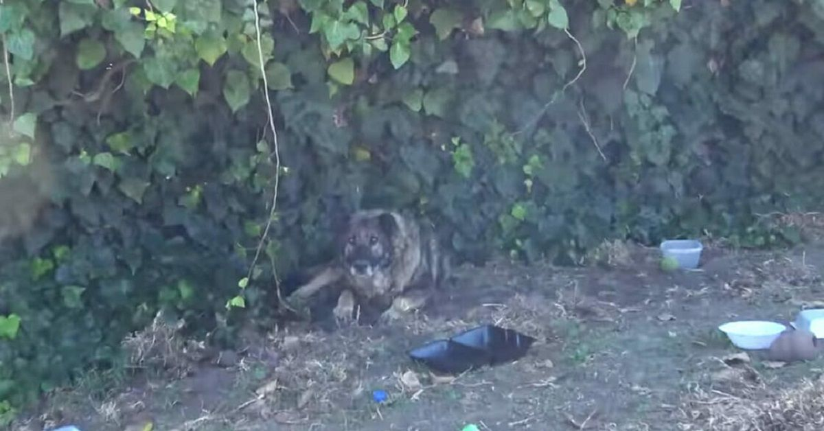 Grizzly il cane abbandonato perché anziano e malato