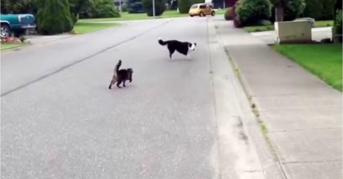 Il-gattino-che-difende-il-cagnolino-la-clip-e-diventata-virale