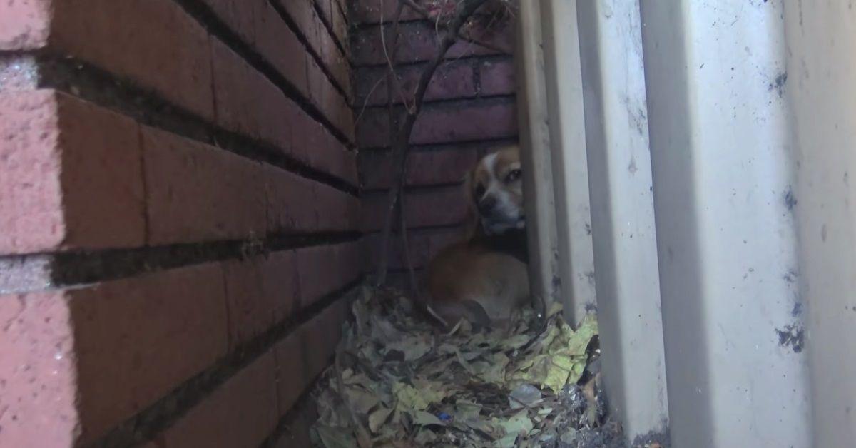 Rufus-il-cane-abbandonato-vicino-la-scuola-viene-salvato-dai-volontari