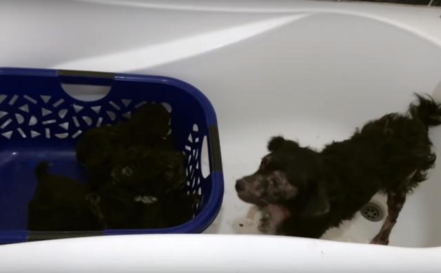 il-salvataggio-della-cagnolina-e-dei-suoi-cuccioli 2