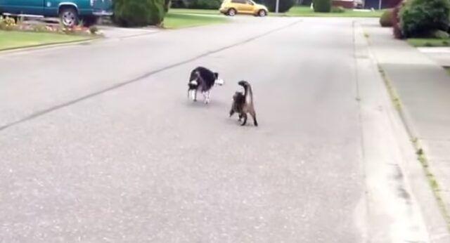 Il-gattino-che-difende-il-cagnolino 2