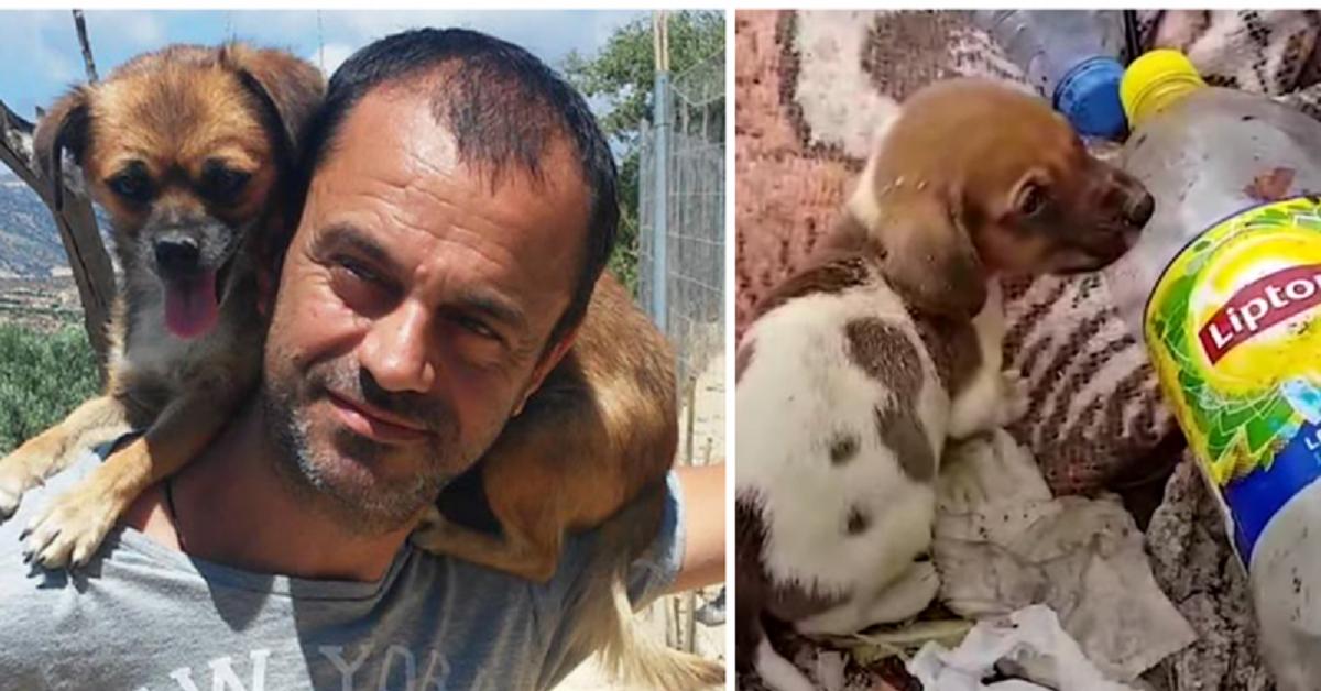 Takis trova 500 cani abbandonati nella discarica