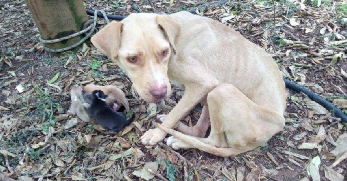 Lara, la cagnolina che ha partorito legata nel bosco