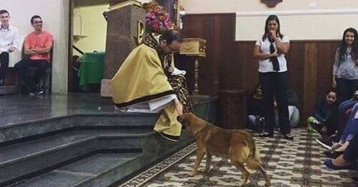 Il cane randagio entra in una chiesa e riceve la benedizione del sacerdote