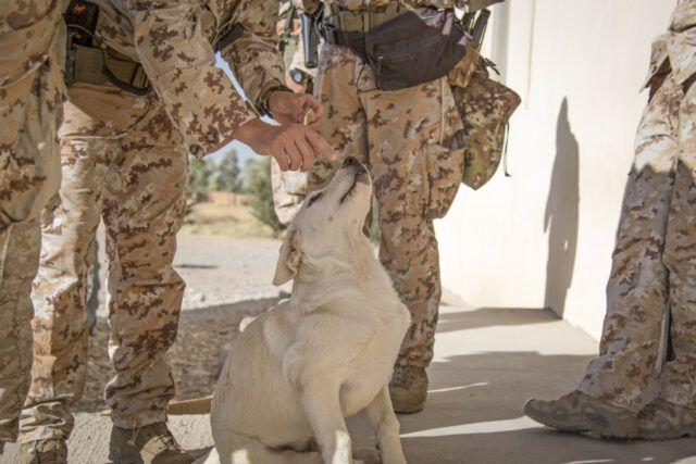 cani-soldati