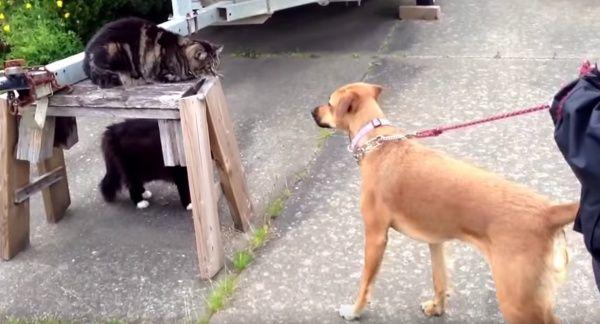 Il-gattino-che-difende-il-cagnolino