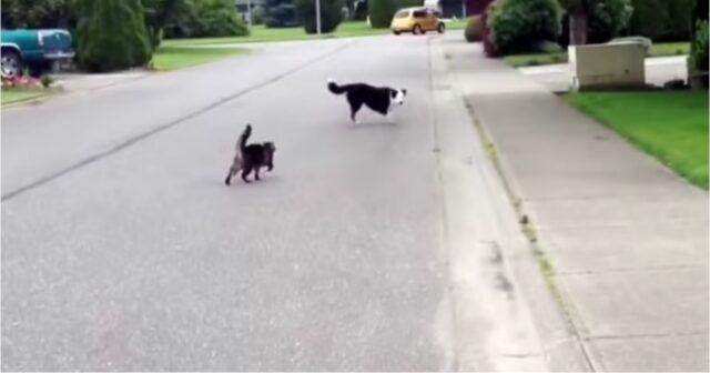 Il-gattino-che-difende-il-cagnolino 1