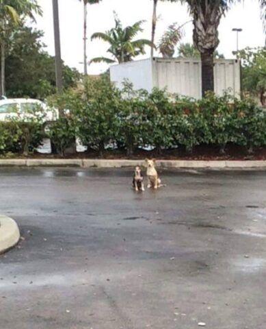 cuccioli-di-everglades