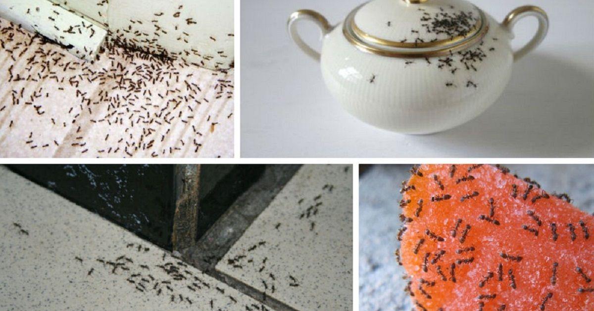 3 modi per sbarazzarsi delle formiche dentro casa