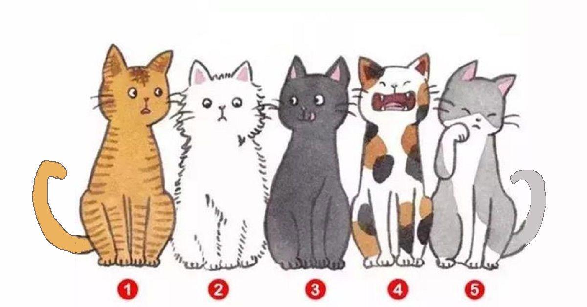 Scegli il gatto che più ti piace e la tua risposta rivelerà ciò che non sapevi di te stesso