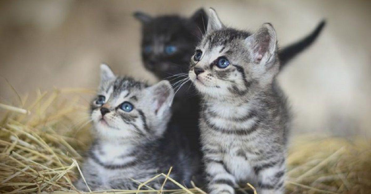 Rossano Calabro, gattini murati nel loro nascondiglio
