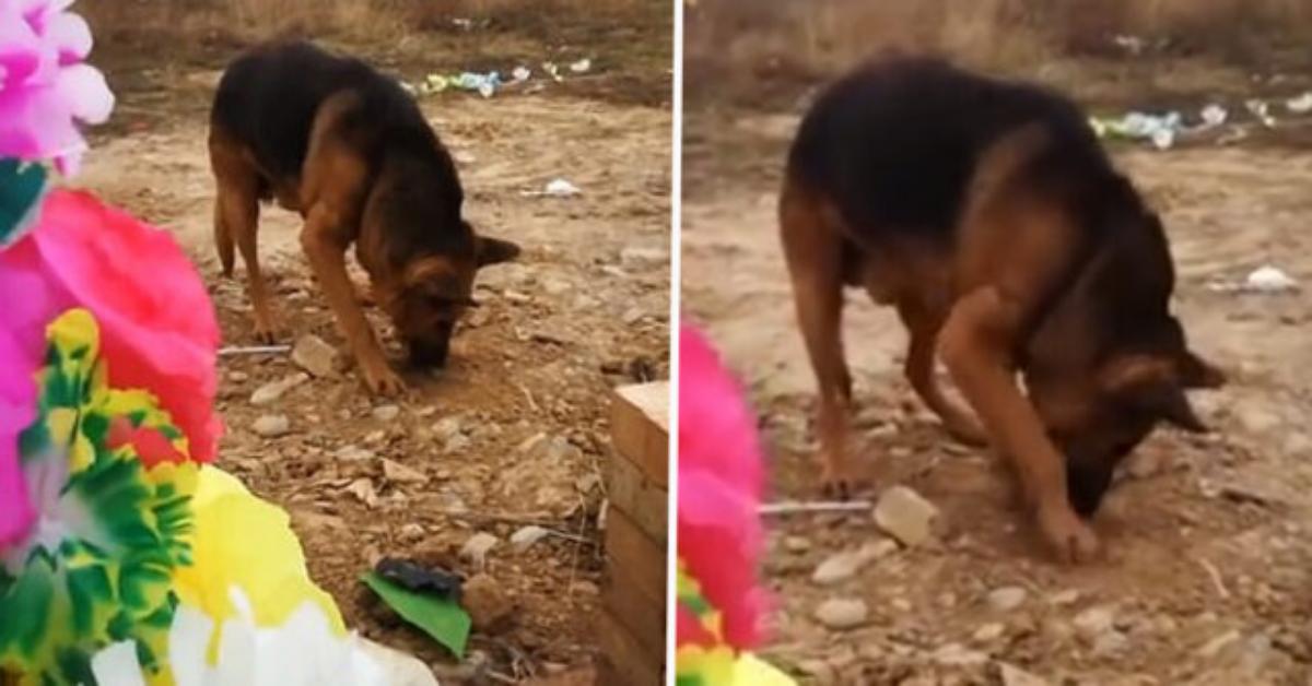 Quando la fedeltà di un cane va oltre la morte