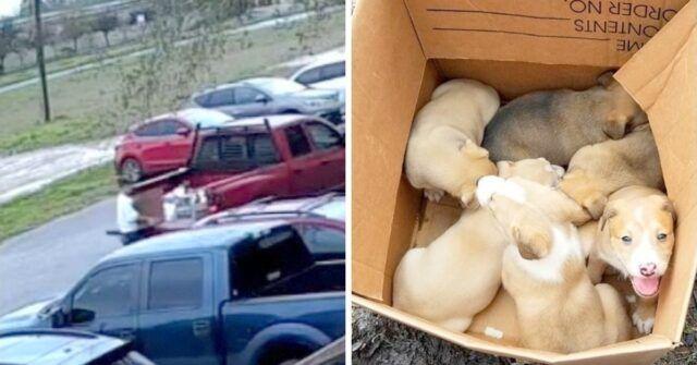 i-cuccioli-abbandonati-in-mezzo-al-parcheggio-trovata-la-responsabile