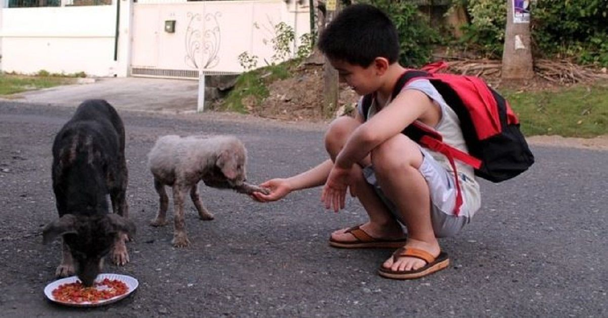 A 9 anni bambino usa i suoi risparmi per comprare cibo per i cani randagi