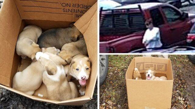 i-cuccioli-abbandonati-in-mezzo-al-parcheggio 1