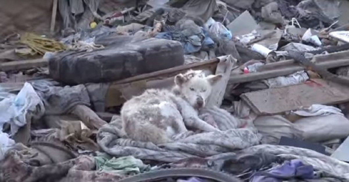 miley-cagnolina-abbandonata-rifiuti