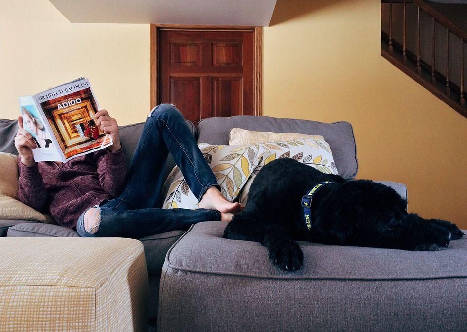 Come tenere casa pulita con un bambino e un animale domestico
