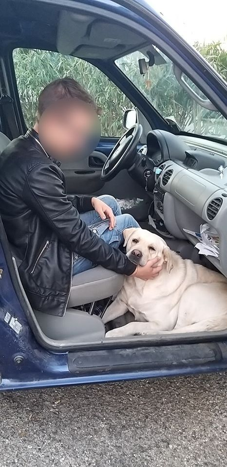 ragazzo-labrador