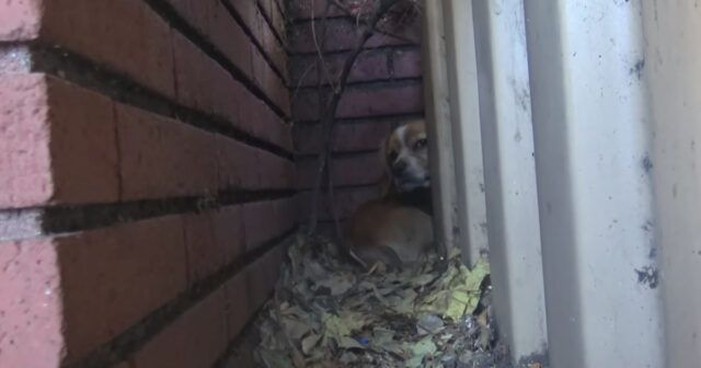 Rufus-il-cane-abbandonato-vicino-la-scuola