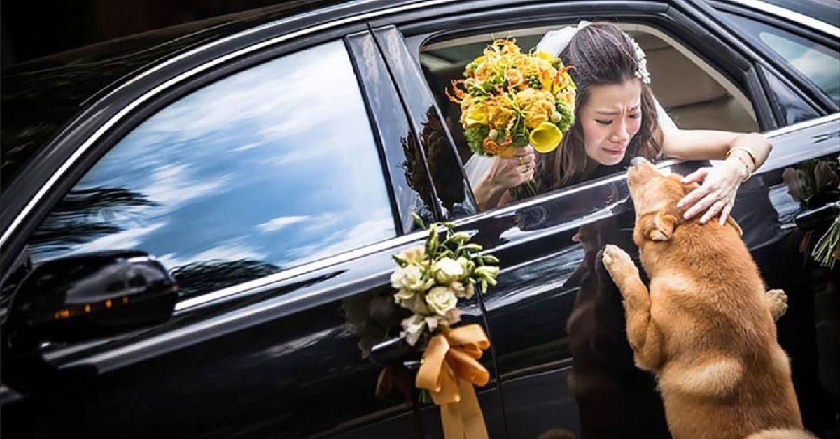 Gougou, il cane di famiglia partecipa al matrimonio e commuove tutti