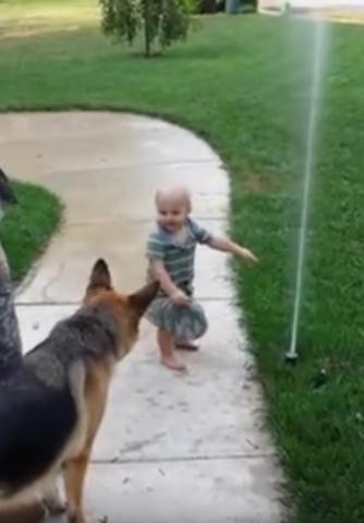 il-cane-che-ha-paura-del-getto-d'acqua