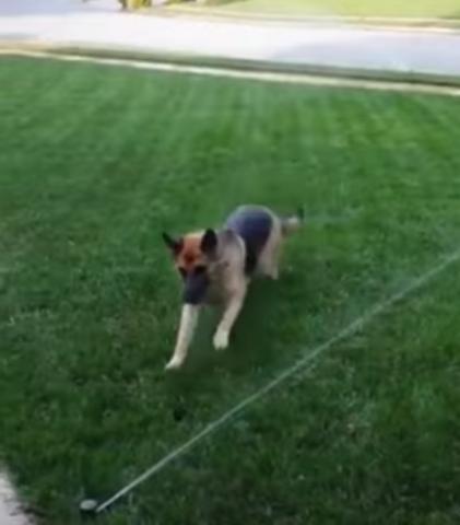il-cane-che-ha-paura-del-getto-d'acqua 2
