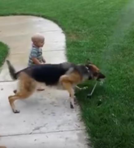 il-cane-che-ha-paura-del-getto-d'acqua 1