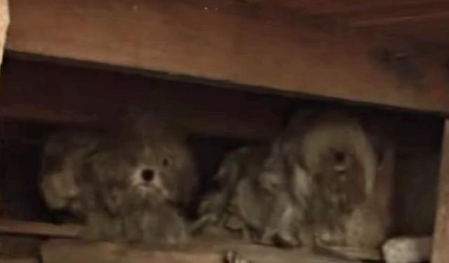 Il-segreto-dei-due-cani-randagi 1