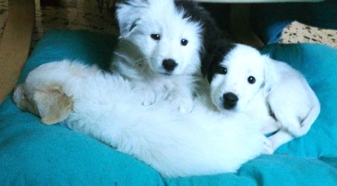 Cuccioli-bianco.neri_