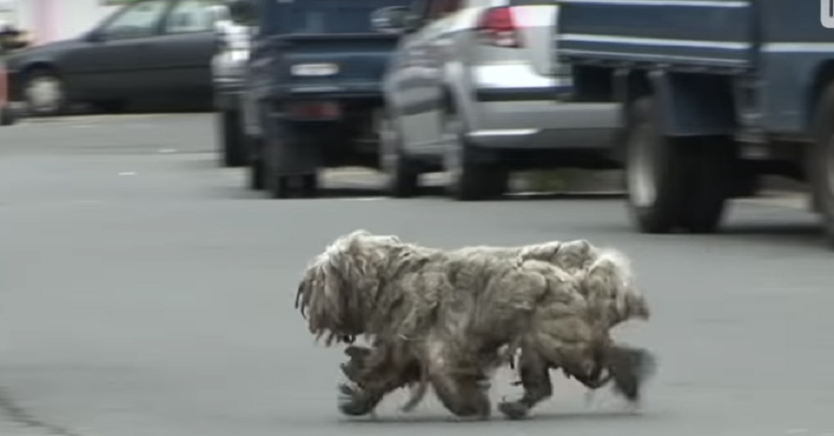 Il-segreto-dei-due-cani-randagi-ed-il-loro-salvataggio
