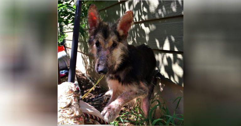 Donna trova un cucciolo in fin di vitta intrappolato nel tel