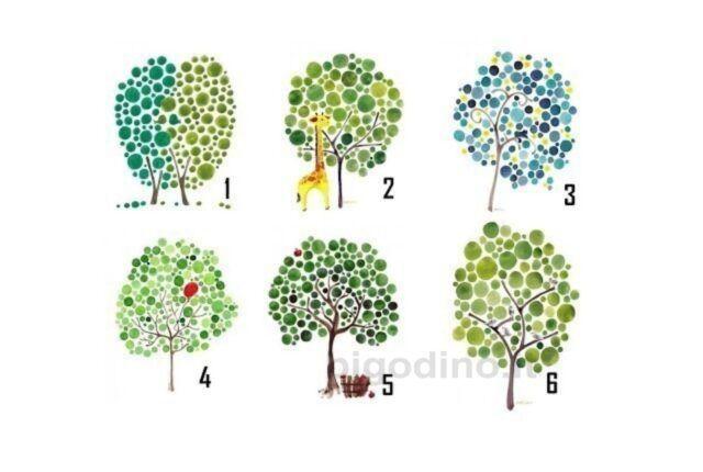 Scegli un albero e scopri chi sei e dove stai andando