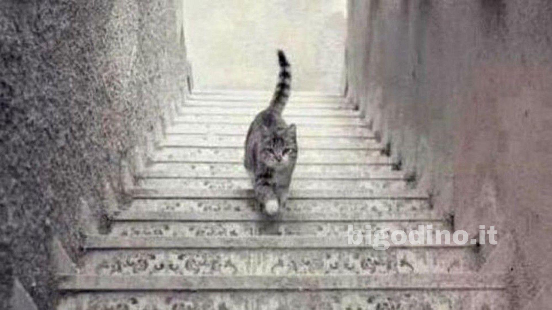 Il gatto sale o scende le scale? Scopri come affronti i problemi