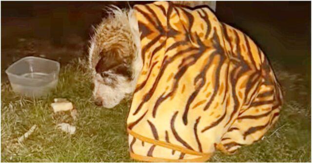 Souki-il-cane-trovato-in-gravi-condizioni-e-la-sua-triste-storia