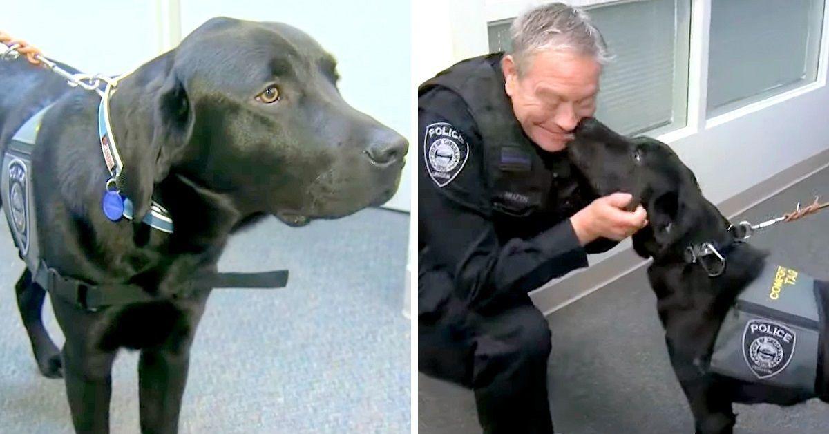 Tagg-il-nuovo-cane-poliziotto-il-suo-giuramento-e-avvenuto-poche-settimane-fa