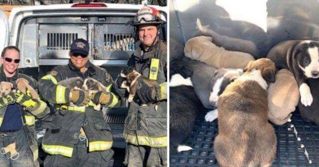 Vigili-del-Fuoco-salvano-la-vita-a-8-cuccioli-in-grave-pericolo-la-comunita-e-rimasta-colpita-dal-loro-gesto...