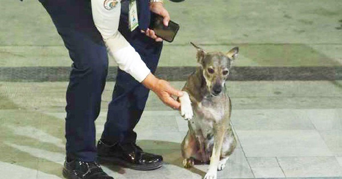 agente-di-sicurezza-cane