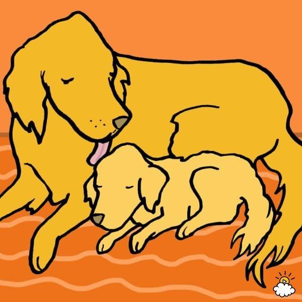 cagnolina-cucciolo